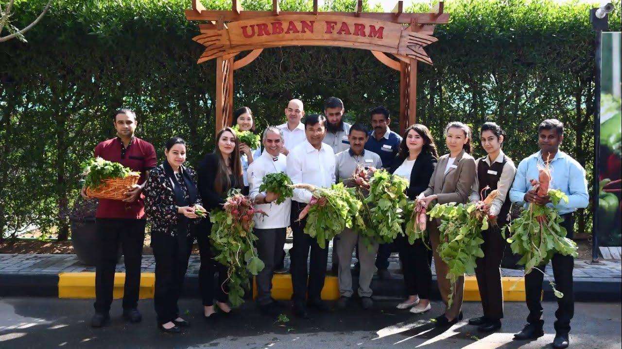 Organic Crops Harvests at Urban Farm