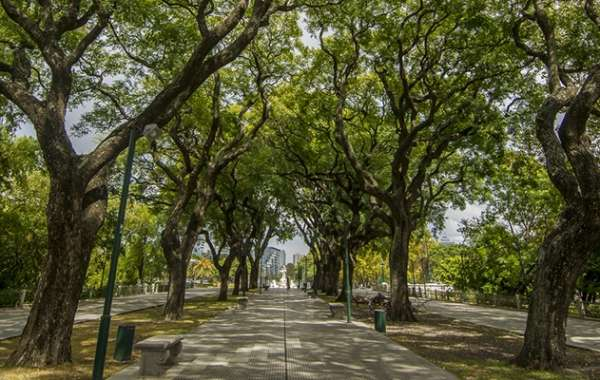Six Ways the City of Buenos Aires Demonstrates its Commitment to Nature Preservation