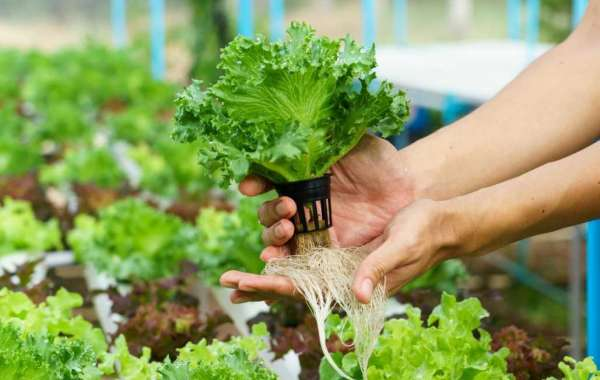 A Beginner's Guide to DIY Hydroponics with Avani Hotels