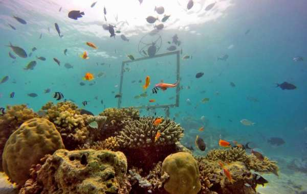 Committed to the Protection and Restoration of Indian Ocean Corals