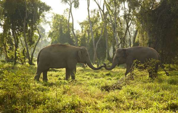 How to Make a Trunk Video Call and Support Elephant Welfare