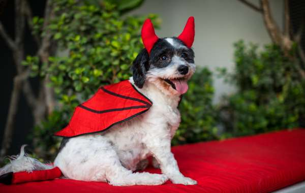 Radisson RED Offers an Exciting Howl-o-ween with your Doggies
